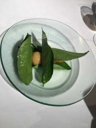 limon ostra
