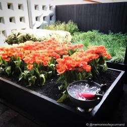 'Edible Tulips'